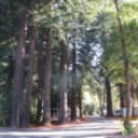 Giant Redwoods RV & Cabins Help Need Now For A Couple In The Summer of 2021 In Beautiful Northern California Avenue Of The Giant Redwoods $$