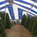 Hayes Farms Has A Seasonal Opportunity To Manage A Christmas Tree Lot In South Florida $$