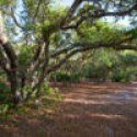 Herky Huffman/ Bull Creek WMA Is Looking For A Temporary, Full Time Volunteer In Florida