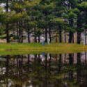 Honey Bear Campground Is Looking For Friendly Couples Or Singles For Work Camping In North Carolina